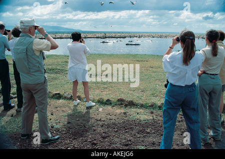 Tourist on foot watching hippos and White Pelicans in Lake Manyara National Park Tanzania East Africa - Stock Photo