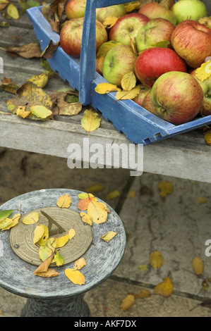 Windfall apples in blue trug on garden seat with red watering can sundial with fallen leaves England - Stock Photo