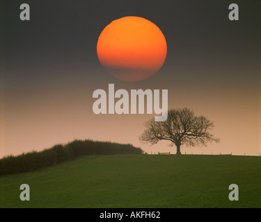 GB - BEDFORDSHIRE: Single Tree with Sun near Woburn - Stock Photo