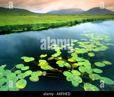 IE - CONNEMARA:  Ahalia River at Maam Cross - Stock Photo