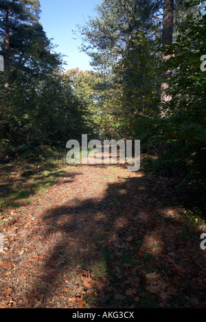 A Leafy Misty, frosty,Sunny Path though woods in Black park - Stock Photo