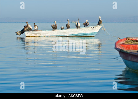 Small fishing boat with covered with Pelicans in the Sea of Cortez La Paz, Baja Sur, Mexico - Stock Photo