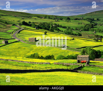 Stone Barns and Wildflower Meadows, Near Thwaite, Swaledale, Yorkshire Dales National Park, Yorkshire,  England, UK
