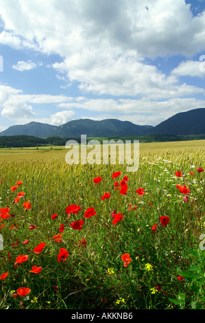 Common Poppy and filed agriculture in Liptov area in Slovakia - Stock Photo