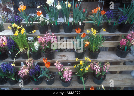 Spring Flowers for sale - Stock Photo