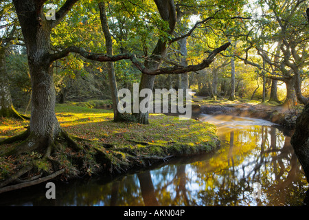 Early morning sunshine lights up this forest scene at Ober Water, New Forest, Hampshire - Stock Photo
