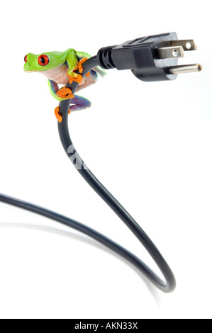 Red-eyed tree frog on electrical cord - Stock Photo