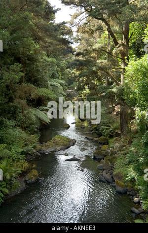 Stream near Whangarei Falls, Whangarei, Northland, North Island, New Zealand - Stock Photo