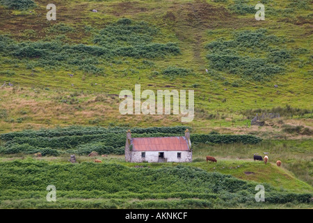 Abandoned croft in the Scottish highlands Caithness United Kingdom - Stock Photo
