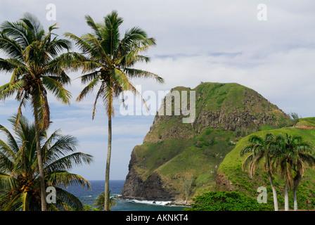 Coconut palms at Kahakuloa eroded volcanic cinder cone on Maui Island Hawaii - Stock Photo