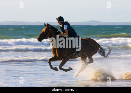 Young woman rides a bay horse on Broad Haven Beach Pembrokeshire Wales United Kingdom - Stock Photo