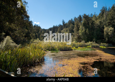 Water's Edge at Lake Matheson, near Fox Glacier, South Island, New Zealand - Stock Photo