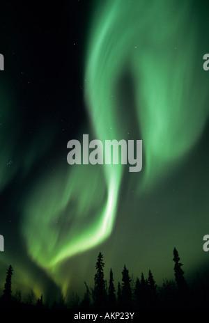 Aurora Borealis 'Northern Lights'  over boreal forest, Northern Alaska - Stock Photo