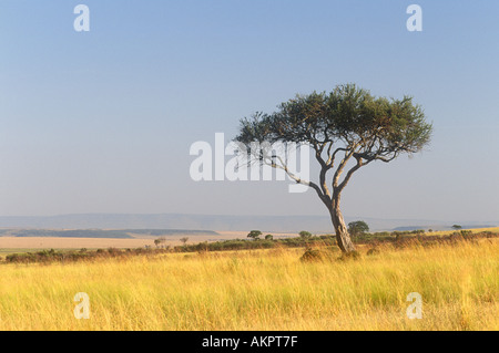 Masai Mara National Reserve South West Kenya Africa - Stock Photo