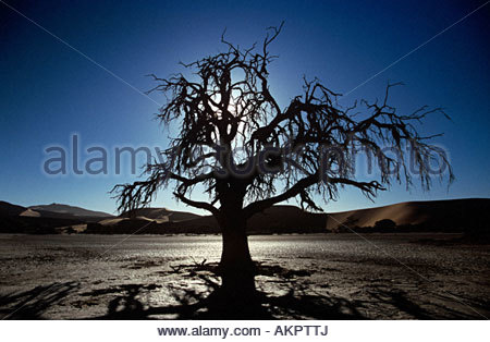 Silhouetted dead tree - Stock Photo