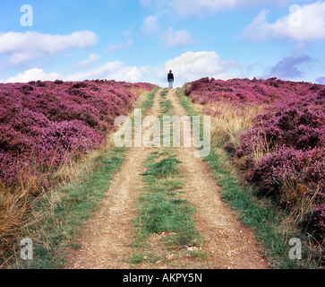 A woman stood at the top of a path through the heather on Newton Moor near Great Ayton in the North York Moors National - Stock Photo