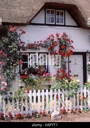 Wherwell Hampshire village part of thatched roof cottage with display of roses in bloom - Stock Photo