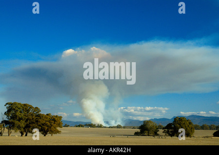 Huge mushroom cloud from controlled burn in Grampians National Park - Stock Photo