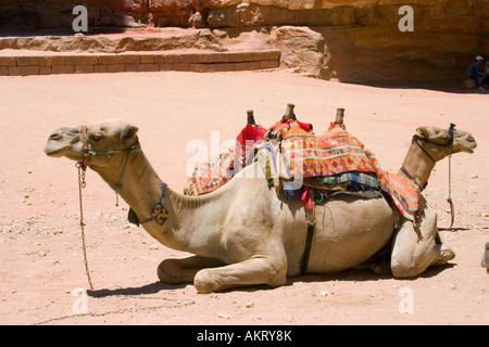 Camels awaiting tourists beside the Treasury building at Petra in Jordan - Stock Photo