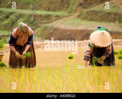 Hmong farmers - Stock Photo