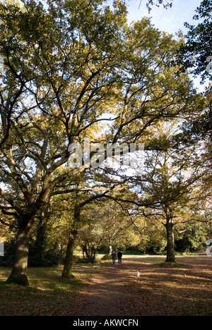 Autumn views of Southampton Common - Stock Photo