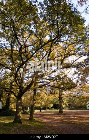 Autumn views of Southampton Common - Stock Photo