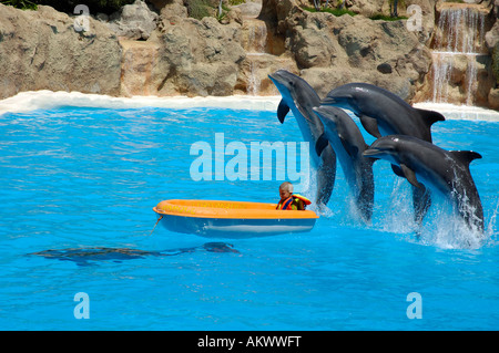 Dolphin show, Loro parque, Tenerife, Canary islands - Stock Photo