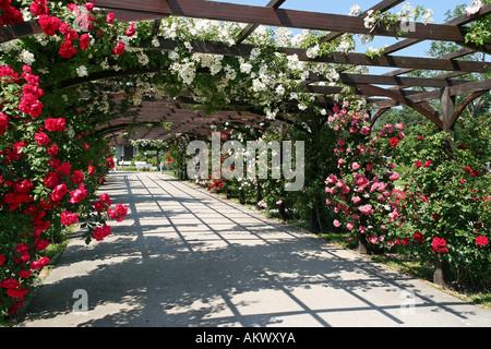 ... Rose Arc, Rosegarden, Rosarium, Doblhoffpark, Baden, Lower Austria,  Austria