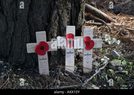 Poppies at the Sheffield Pals Memorial on the Somme battlefield in France - Stock Photo
