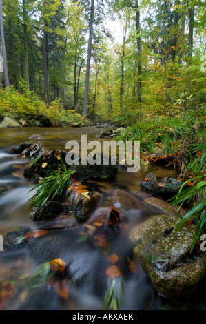 Brook in the Harz National Park, Germany - Stock Photo