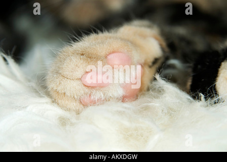 Paw of a cat - Stock Photo