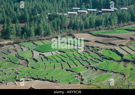 Bhutan, Kingdom, Himalaya, offsets, rice paddies - Stock Photo