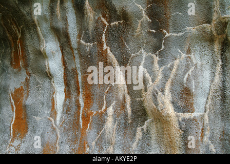 Red alga and litchen on the surface of a shotcrete wall, Beluno, Italy - Stock Photo