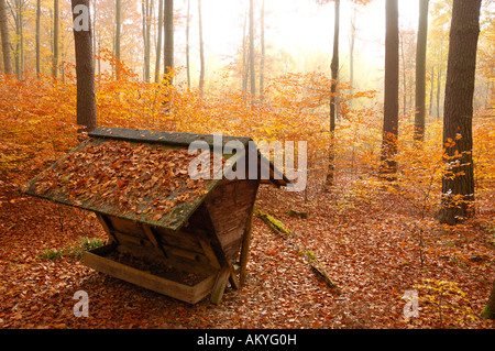 Feed rack in autunmal forest, natural park Schoenbuch, Baden-Wuerttemberg, Germany Stock Photo