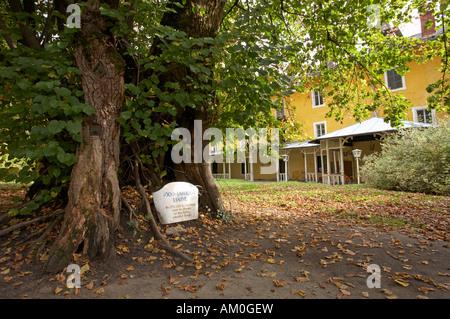 Thousand year old linden tree, Millstatt, Carinthia, Austria - Stock Photo