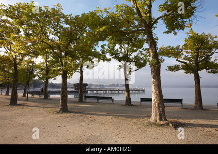 Trees at Woerthersee lake near Klagenfurt, Carinthia, Austria - Stock Photo