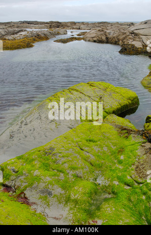 Tidal ponds at the Atlanic coast of Donegal at low tide with granite rocks covered by llight green algae, Ireland - Stock Photo
