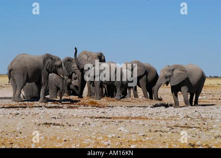 Elefants at Gemsbokvlakte waterhole, Etosha National Parc, Namibia - Stock Photo