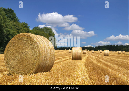 Hay bales in a field on a bright summers day - Stock Photo