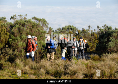 Group of trekkers with local guide on a footpath in heathland Mount Kenya National Park Kenya - Stock Photo