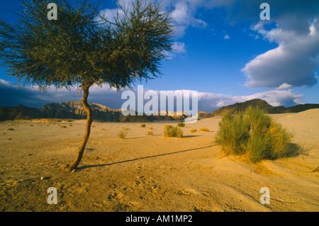 EGYPT Sinai - Stock Photo