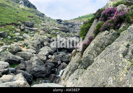 A rocky path up the Langdale Pikes with Stickle Ghyll waterfall running down the side. The heather is in bloom. Lake District,UK
