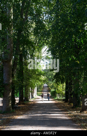 student walking away down Avenue of trees - Stock Photo