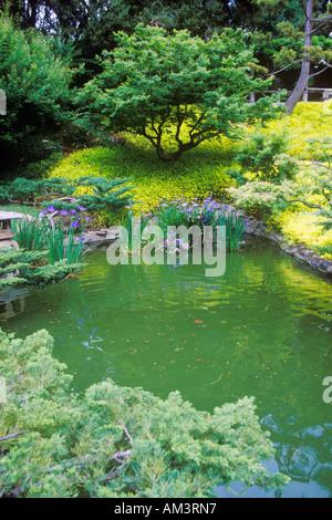 ... Huntington Library And Gardens Japanese Gardens Pasadena CA   Stock  Photo