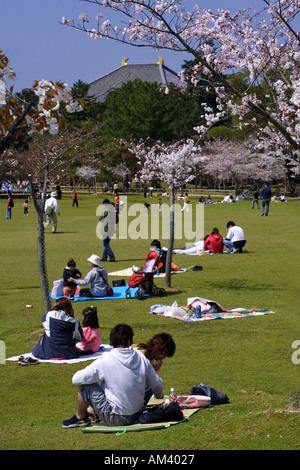 Japanese families enjoying cherry blossom parties Hanami in the grounds of Nara park in front of Todaiji temple - Stock Photo