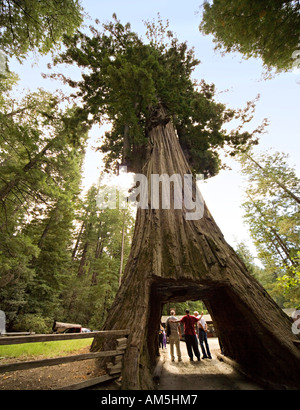 Tourists posing and taking pictures under drive thru Redwood tree. Roadside attraction: Chandelier Tree, Leggett, - Stock Photo