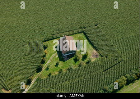 Single house in a cornfield, Germany - Stock Photo