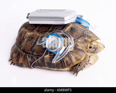 Tortoise with an MP3 player. - Stock Photo