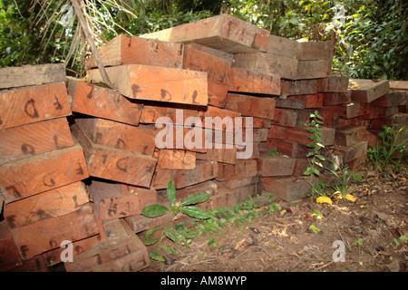 Valuable hardwood planks - Stock Photo
