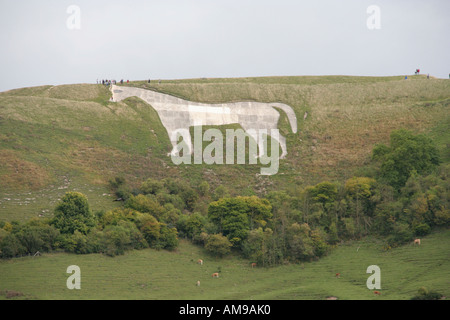 westbury hill white horse chalk carving wiltshire southern england uk gb - Stock Photo